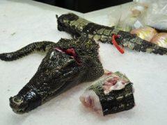 viande de crocodile