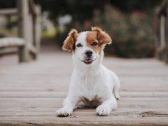 bienfaits des croquettes pour chiens